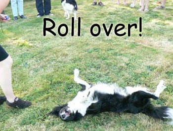 Fido Adding Rollover to its Repertoire of Tricks?