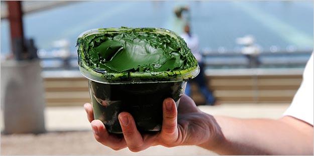 Algae-Based Fuel Could Provide Viable Energy Alternative