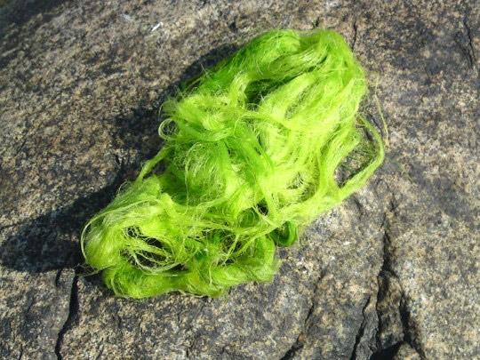 algae-large2