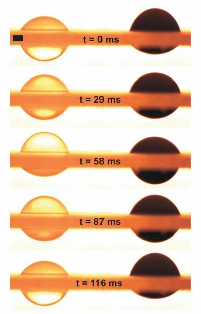 liquidpiston Liquid pistons could revolutionize camera phones and lenses