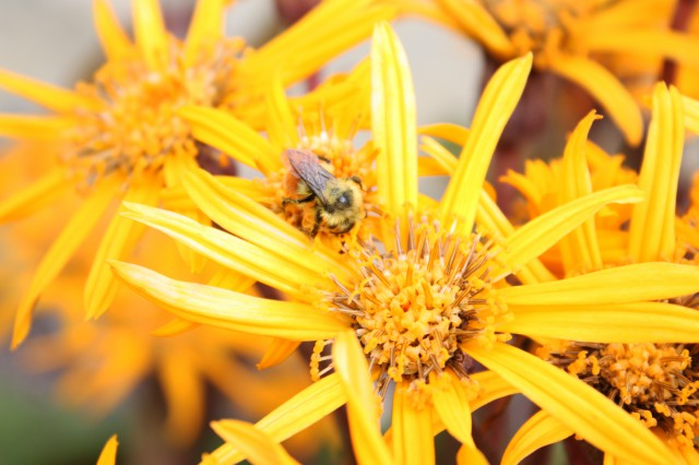 bees-640x426 Cellphones Could Be Killing Off Bees