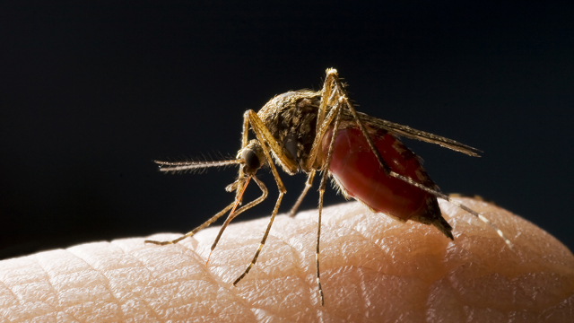 malaria Malaria Cure Finally Discovered? So it Seems