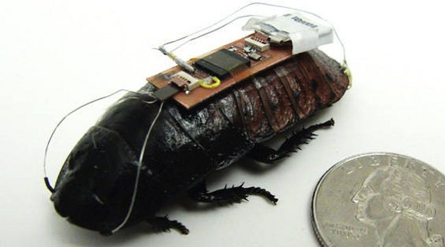 roachcontroller Beyond Bizzare: Scientists Can Control Roaches