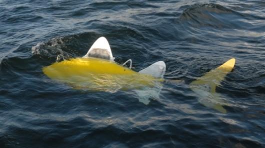 robofish Robotic fish designed to patrol harbors for pollution