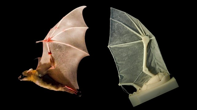 bat-640x360 Researchers Craft Fully Working Robotic Bat Wings