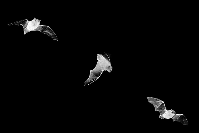 bats Get Your Bat On: Seeing in the Dark with your iPhone