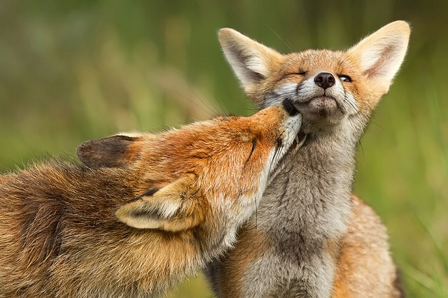 fox-photos-mobilemag-10 Fox Photography: It's Time To Fall In Love With Foxes