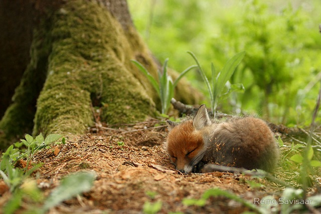 fox-photos-mobilemag-12 Fox Photography: It's Time To Fall In Love With Foxes