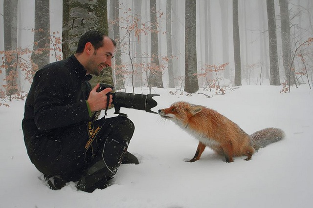 fox-photos-mobilemag-16 Fox Photography: It's Time To Fall In Love With Foxes