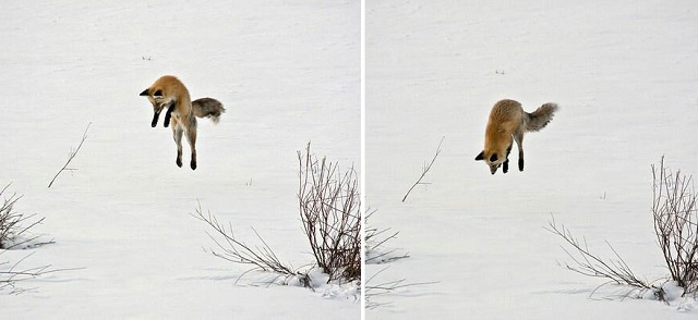 fox-photos-mobilemag-19 Fox Photography: It's Time To Fall In Love With Foxes