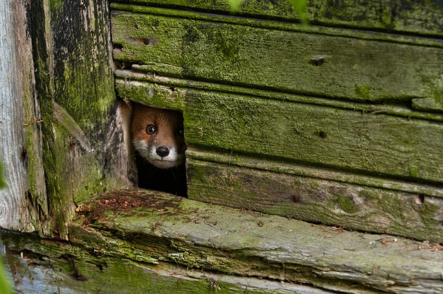 fox-photos-mobilemag-2 Fox Photography: It's Time To Fall In Love With Foxes
