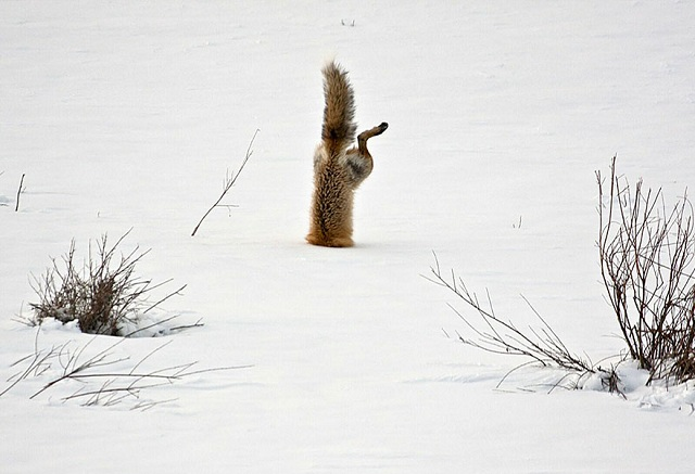 fox-photos-mobilemag-20 Fox Photography: It's Time To Fall In Love With Foxes