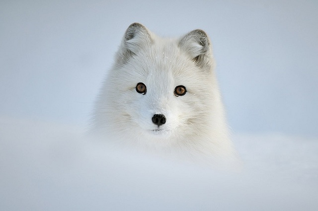 fox-photos-mobilemag-21 Fox Photography: It's Time To Fall In Love With Foxes