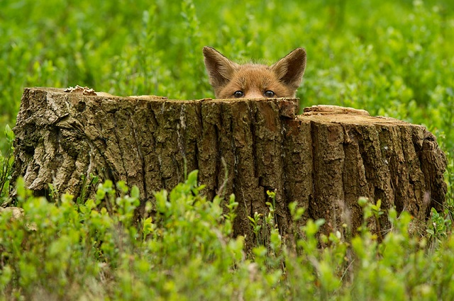 fox-photos-mobilemag-8 Fox Photography: It's Time To Fall In Love With Foxes