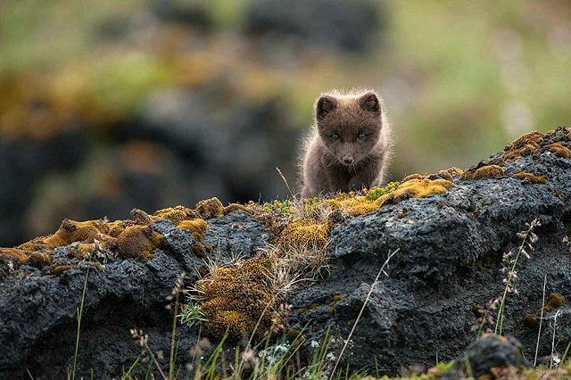 fox-photos-mobilemag-9 Fox Photography: It's Time To Fall In Love With Foxes