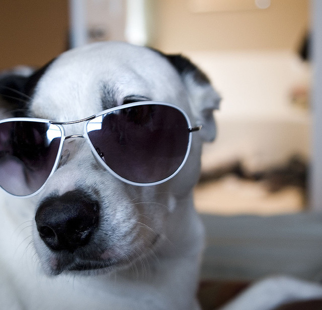 dog-in-sunglasses Dogs Chill On Couch As Burglars Leave With Flat Screen TV (Video)